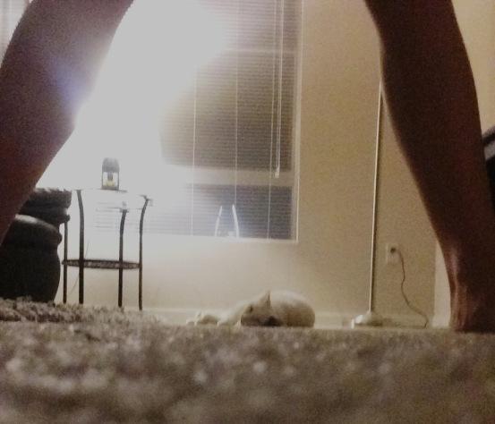 patch thru my legs.jpg